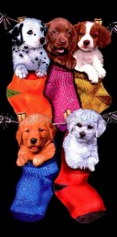 1394642227-2438-chiens-chaussettes.jpg